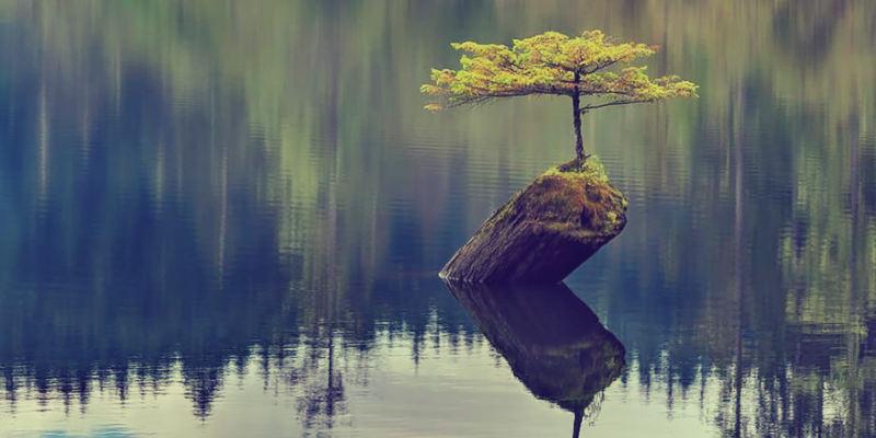 resilienza forza d'animo