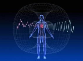 toroide cuore corpo umano