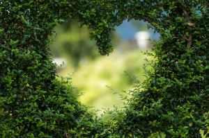 gratiitudine e amore